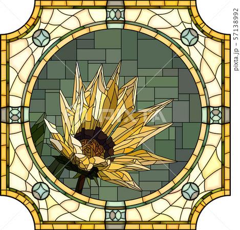 Vector illustration of blooming yellow gazania. 57138992