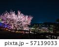 偕楽園 水戸の梅まつり ライトアップ夜景 (茨城県水戸市) 2019年3月 57139033