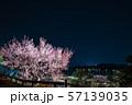 偕楽園 水戸の梅まつり ライトアップ夜景 (茨城県水戸市) 2019年3月 57139035