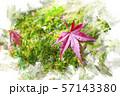 秋のもみじ 落葉 水彩画風 57143380