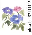 水彩 夏の花といえば 朝顔 アサガオ あさがお 手描き 残暑   57144445