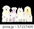 白い犬のグループ 57157406
