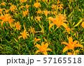 花 フラワー お花 57165518
