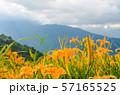 花 フラワー お花 57165525