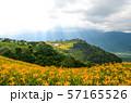 花 フラワー お花 57165526