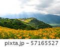花 フラワー お花 57165527