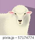 羊 57174774