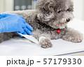 pet dog get wound bandaged 57179330