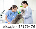 pet dog and the vet 57179476