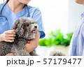 veterinarian at veterinary clinic 57179477