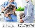 veterinarian at veterinary clinic 57179479