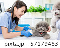 pet dog get wound bandaged 57179483