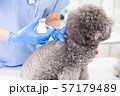 veterinarian give dog an injection 57179489