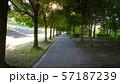 公園脇にある木漏れ日の並木道 57187239