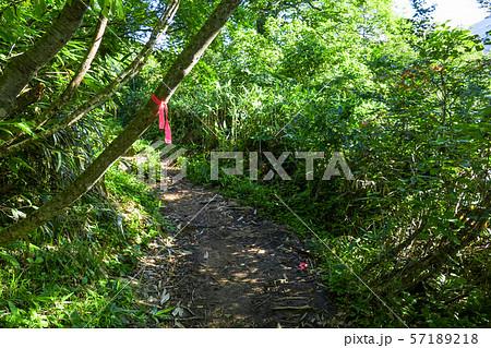 登山道 (正しい道を示すピンクリボン) 57189218