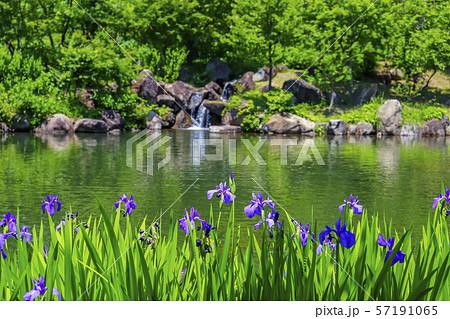 【山梨県】初夏のハイジの村 ハナショウブの咲く虹の池 57191065