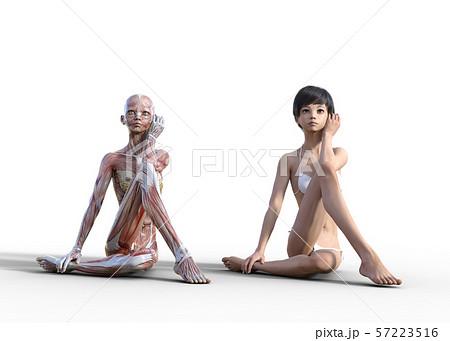 女性 解剖 筋肉 perming3DCG イラスト素材 57223516