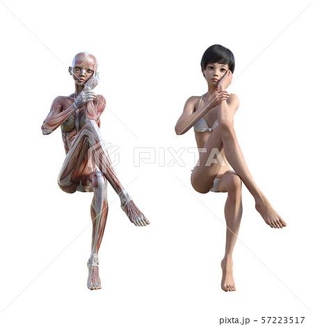 女性 解剖 筋肉 perming3DCG イラスト素材 57223517