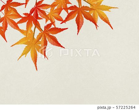 秋を感じるイラスト(紅葉、和紙、白色) 57225264