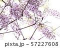 藤(4) 57227608