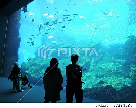 仙台うみの杜水族館 57231536