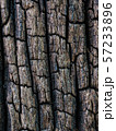 Closeup dried texture of dark brown bark. 57233896