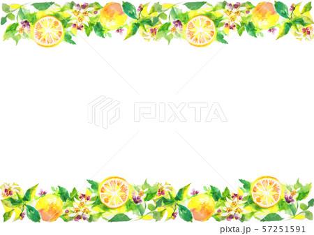 レモン イラスト 柑橘 背景素材  57251591