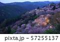 奈良 吉野山 下千本 桜 ライトアップ 57255137