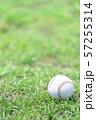 野球ボール 57255314