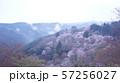 雲海に包まれる奈良県吉野山の下千本の桜 57256027
