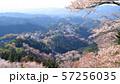 吉野山 上千本  花矢倉展望台 57256035