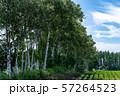 北海道・十勝 白樺並木 57264523