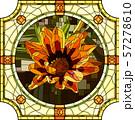 Vector illustration of blooming orange gazania. 57278610