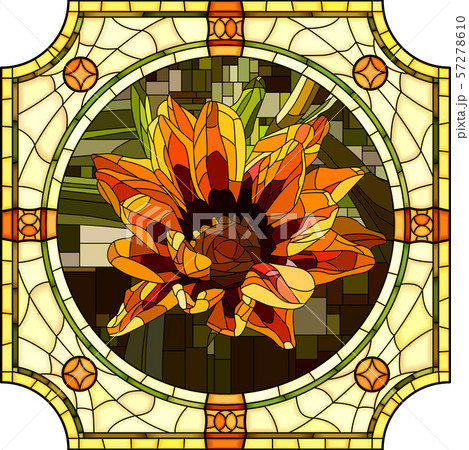 Vector illustration of blooming orange gazania. 57278610