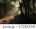 Forest path 57283258