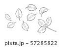 バラの線描画 57285822