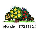 レモンの木 リンゴの木 57285828