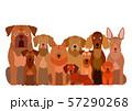 茶色い犬のグループ 57290268