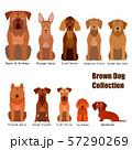 茶色い犬の一覧 57290269