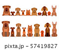 茶色い犬のボーダー セット 57419827