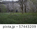 徳澤の朝  57443209