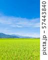 秋の田園風景 (大町市から爺ヶ岳・鹿島槍ヶ岳・五竜岳を望む) 57443840