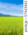 秋の田園風景 (大町市から爺ヶ岳・鹿島槍ヶ岳・五竜岳を望む) 57443842