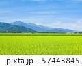 秋の田園風景 (大町市から爺ヶ岳・鹿島槍ヶ岳・五竜岳を望む) 57443845
