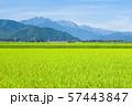 秋の田園風景 (大町市から爺ヶ岳・鹿島槍ヶ岳・五竜岳を望む) 57443847