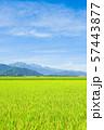秋の田園風景 (大町市から爺ヶ岳・鹿島槍ヶ岳・五竜岳を望む) 57443877