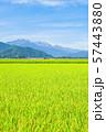秋の田園風景 (大町市から爺ヶ岳・鹿島槍ヶ岳・五竜岳を望む) 57443880