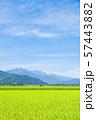 秋の田園風景 (大町市から爺ヶ岳・鹿島槍ヶ岳・五竜岳を望む) 57443882