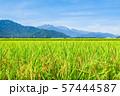 秋の田園風景 (大町市から爺ヶ岳・鹿島槍ヶ岳・五竜岳を望む) 57444587