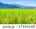秋の田園風景 (大町市から爺ヶ岳・鹿島槍ヶ岳・五竜岳を望む) 57444588